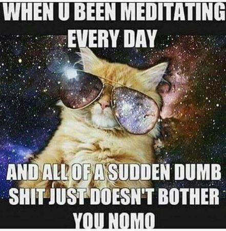 Cat Meditation Meme